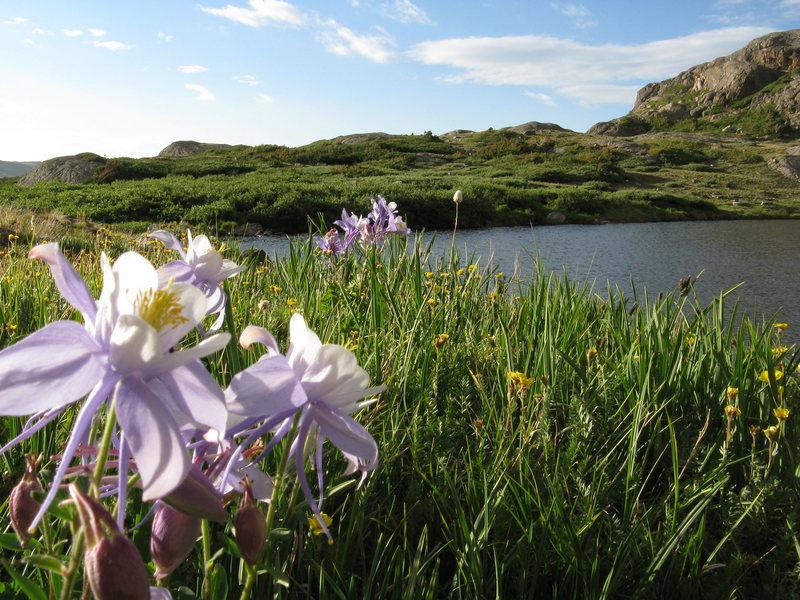 ohman lake