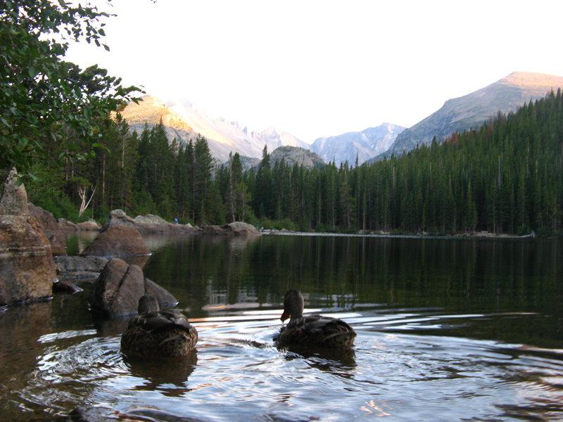 Rock Climbing Photo: ducks at bear lake