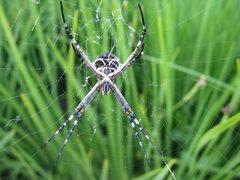 Rock Climbing Photo: spider