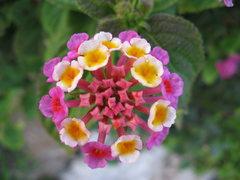 Rock Climbing Photo: strange flower
