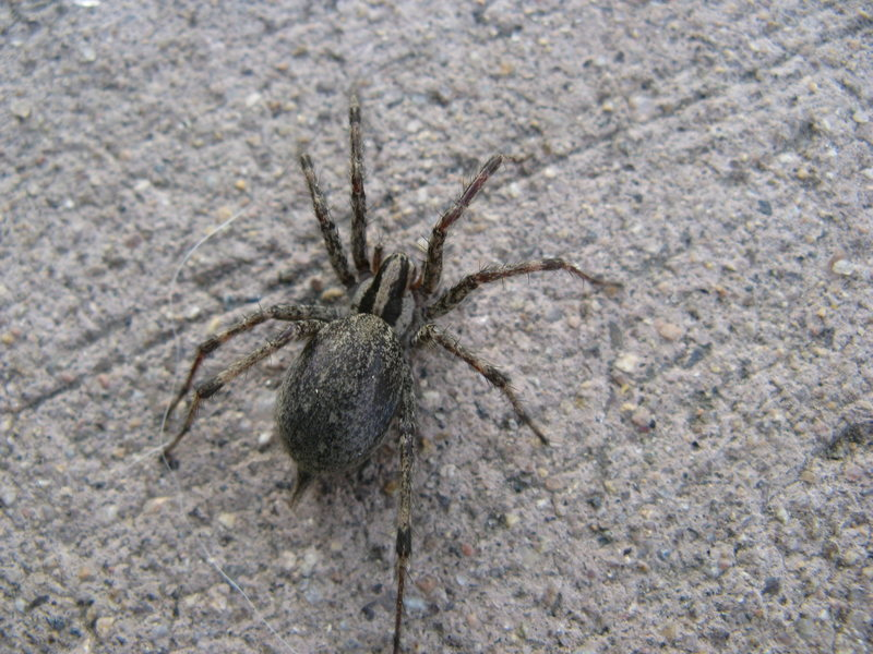 Rock Climbing Photo: spider
