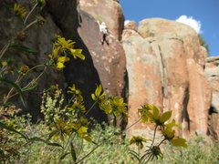 Rock Climbing Photo: the Rock Garden San Luis Valley photo cred: Dave F...