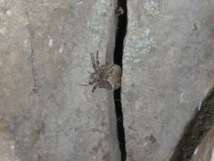 Rock Climbing Photo: Spider on the East Boulder