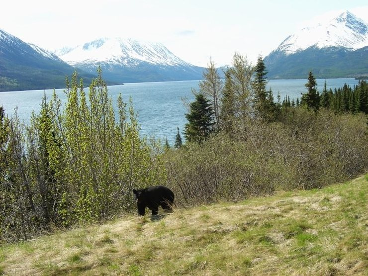Alaska, May 07.
