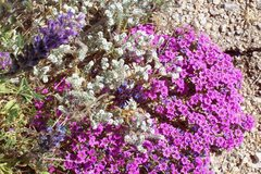 Rock Climbing Photo: More wildflowers