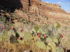 Rock Climbing Photo: Cactus.