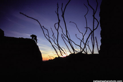 Hueco at sunset w/ocotillo.