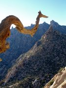Rock Climbing Photo: Serpent up high on our climb.  In the MNP 9/24/08;...