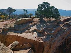 Rock Climbing Photo: rap tree