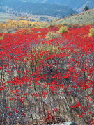 Rock Climbing Photo: Sumac season in the fall ...