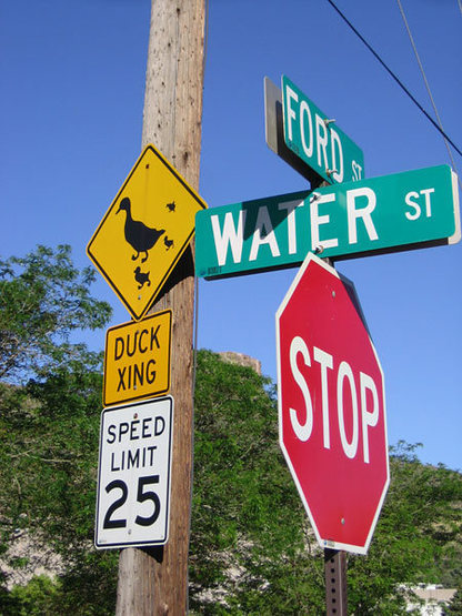 watch for quackers ~  Golden, CO.