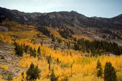 Rock Climbing Photo: Bishop Creek in all its Fall Glory