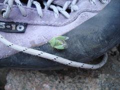 Rock Climbing Photo: Green bug