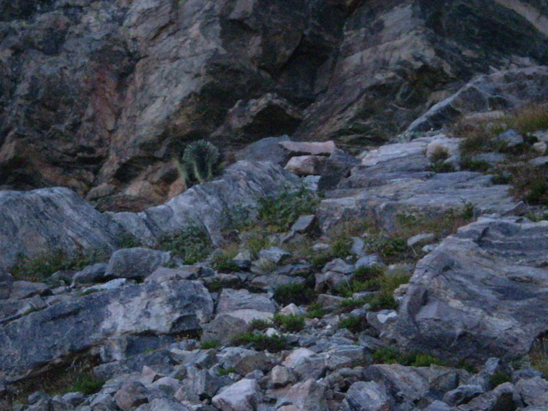 Can you spot this unusual visitor?  A porcupine up near the base...wow.  A bit blurry due to low light & zoom.