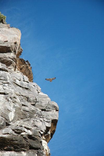 Rock Climbing Photo: redtail hawk