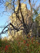 Rock Climbing Photo: Life at Malpais Spring.  Taken 10/01/08