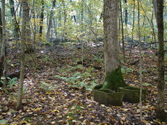 Rock Climbing Photo: Marker in the woods from the concrete slabs.  The ...