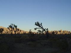6:30 sunrise somewhere at J-Tree November 2007