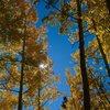Fall colors in Rock Creek