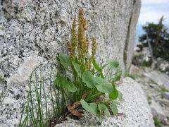 Rock Climbing Photo: late summer at the base