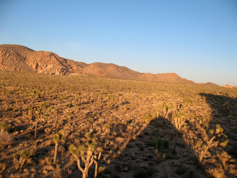 The view from the top of the Lynn Hill Memorial Boulder, JTNP.