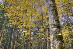 Rock Climbing Photo: Devils Lake. Fall trees. October '08.
