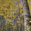 Devils Lake. Fall trees. October '08.