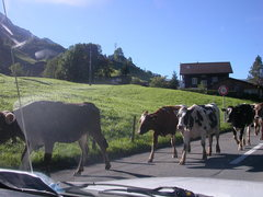Rock Climbing Photo: Traffic jam, Swiss style, in Melchtal... even if i...