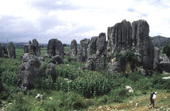 Rock Climbing Photo: The Stone Forest.