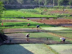 Rock Climbing Photo: Spring rice planting in the Fumin valley.