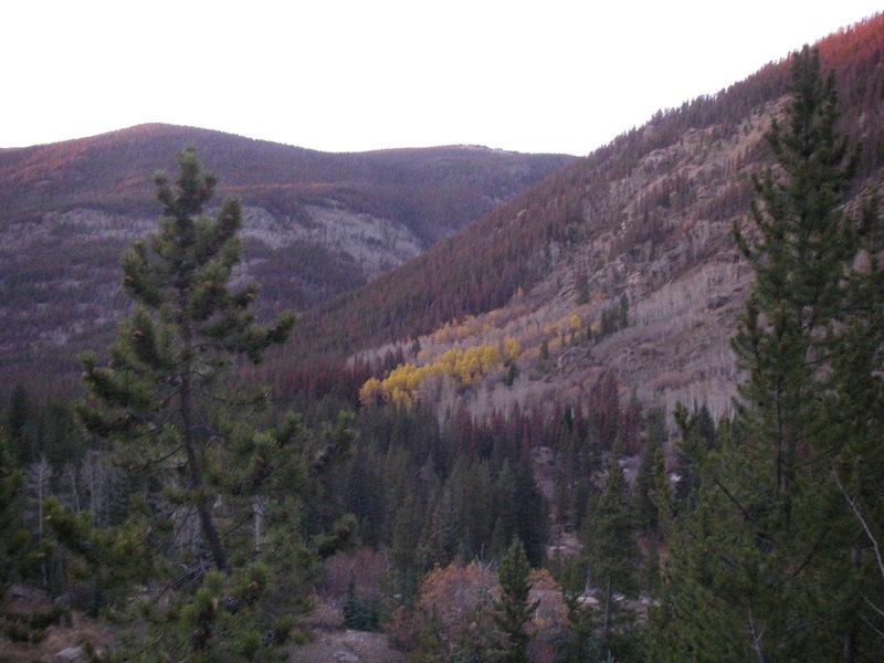 Aspens lighting the trail back