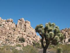 Rock Climbing Photo: Santa's Workshop from the trail, Joshua Tree N...