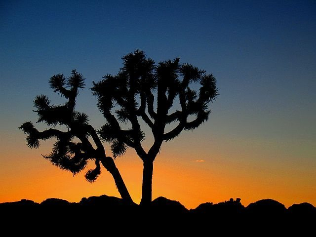 Joshua Tree sunset, Joshua Tree NP
