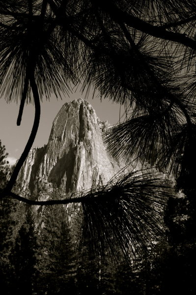 Sentinel Rock framed by pine trees