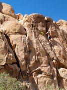 Rock Climbing Photo: Nearing the top of Minotaur (5.7), Joshua Tree NP
