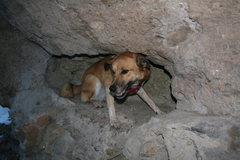 Rock Climbing Photo: Sasquatch in her natural habitat.