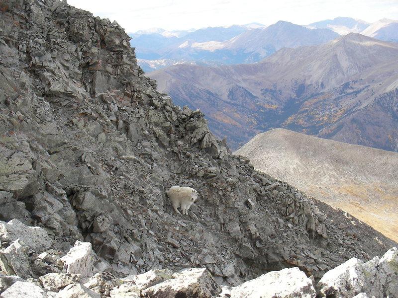 Rock Climbing Photo: Mt. Antero.