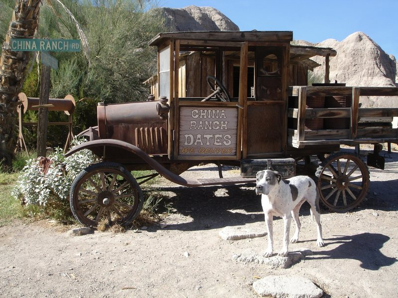 China Ranch, ranch dog scoping out the action at the picnic cabanas.<br> <br> Taken 10/24/08