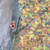 Devils Lake. Perverted Inspiration. Leaves with a climber in the background. Photo: Isaac Therneau. October '08.