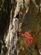 Rock Climbing Photo: Another shot of Ben on Bandolier with amazing fall...