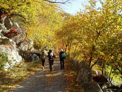 Rock Climbing Photo: Undercliff fall colors during Gunks Reunion 2008.