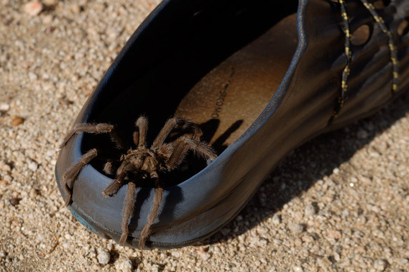 Rock Climbing Photo: Tarantula