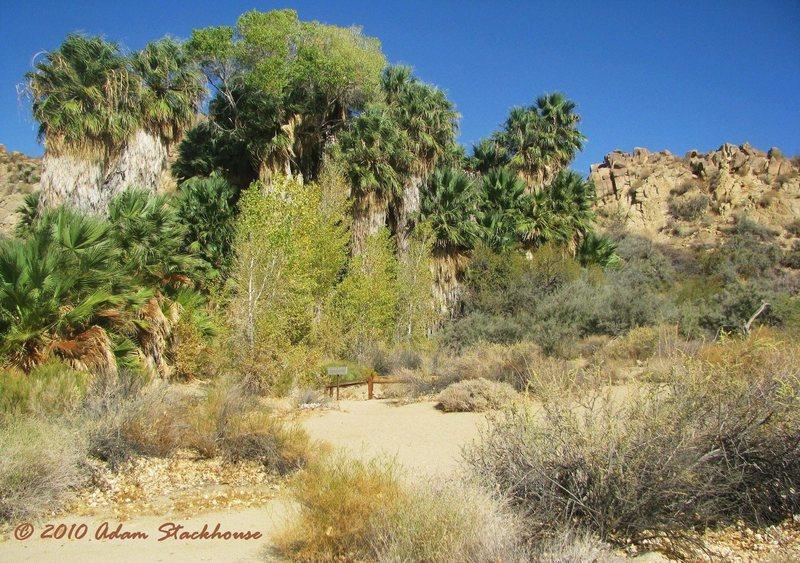 Rock Climbing Photo: Cottonwood Springs