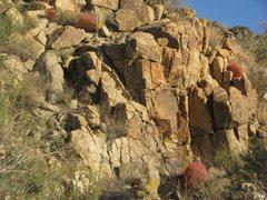Rock Climbing Photo: Beautiful cactus