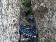 Rock Climbing Photo: Part of an anchor on Pingora.