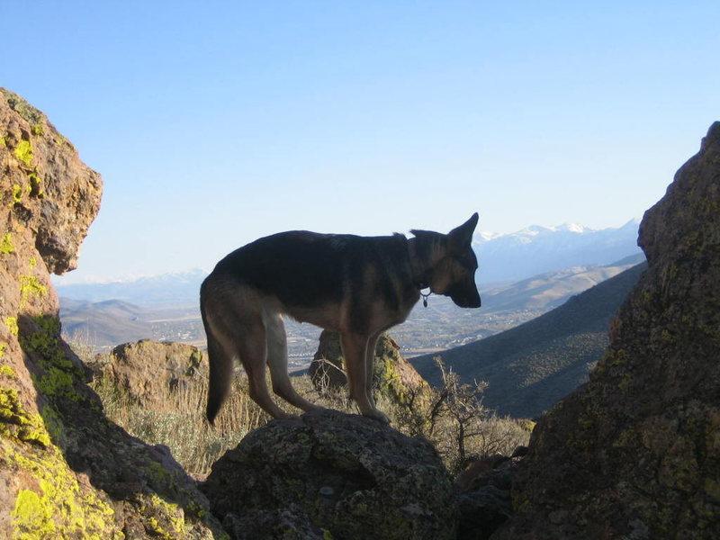 Jade climbing a Washoe Boulder