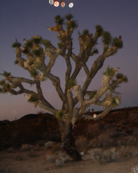 Tossing coins at the &quot;Money Bucket Tree&quot; along the Old Mojave Road.<br> <br> Taken 11/18/08