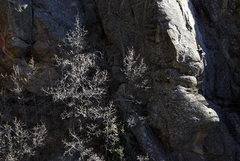 Rock Climbing Photo: Sucky the Cow