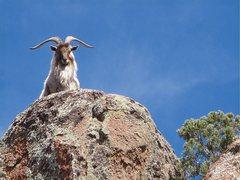 Rock Climbing Photo: at the local crag