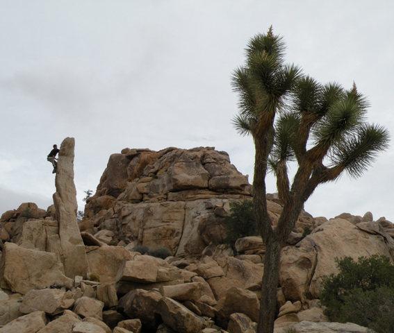 Rock Climbing Photo: Aiguille de Joshua Tree.